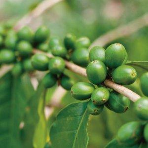 Del Parque Farmacia Y Laboratorio Extracto De Café Verde